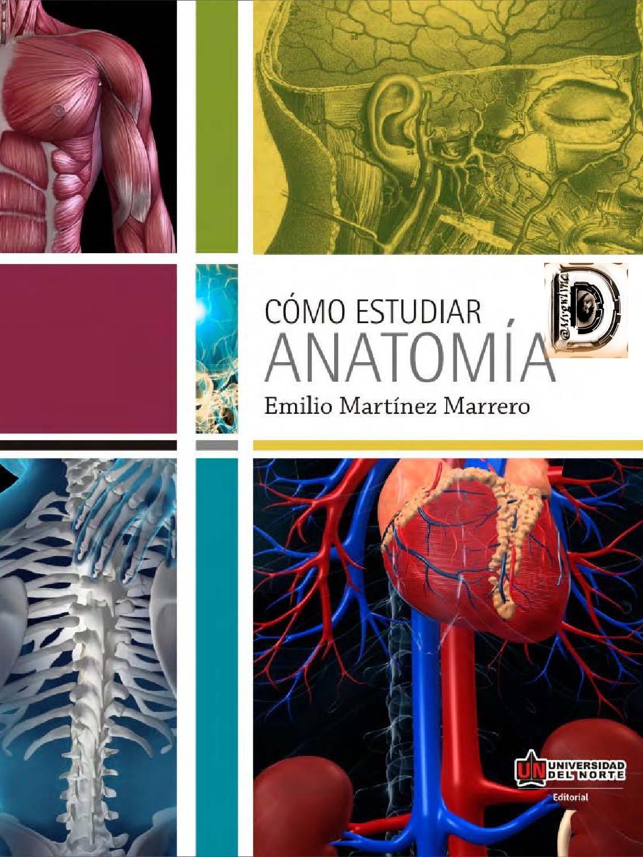 Como estudiar anatomia | Estudio | Pinterest | Estudiar, Anatomía y ...