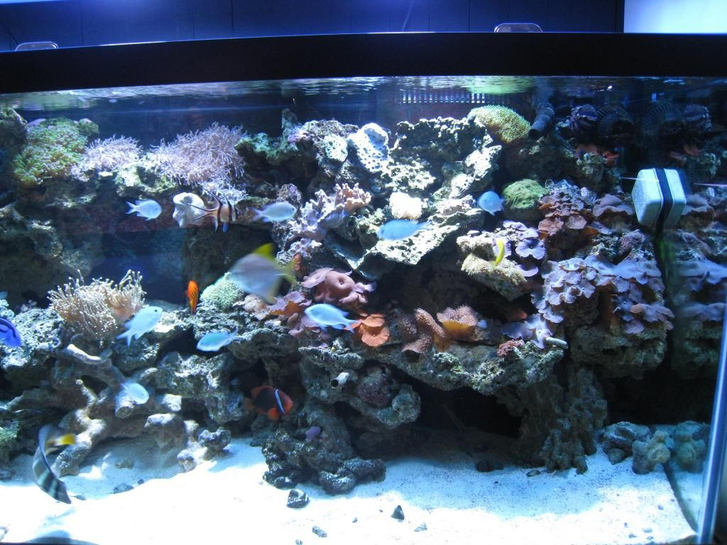 Freshwater aquarium fish help - J M Aquatics And Pet Center In Grand Junction Colorado Can Help You Create The Perfect