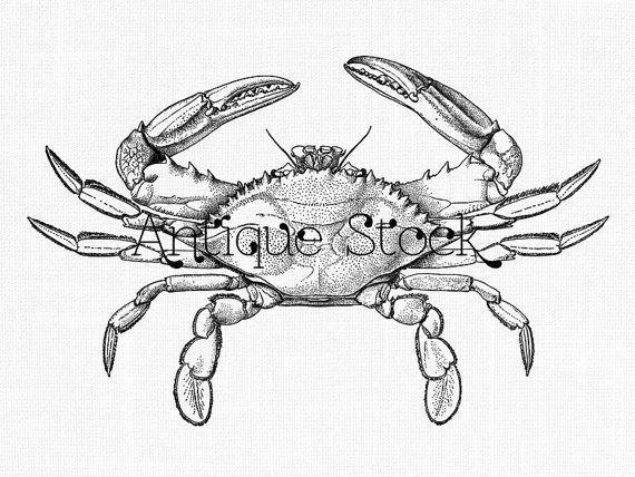 Pin By Kwieciendiane On Crabs In 2020 Blue Crab Crab Crab Clipart