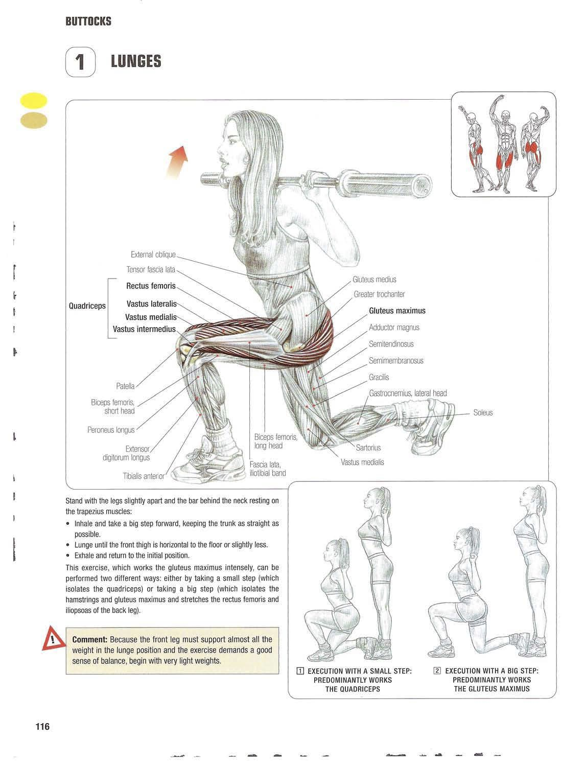 Strength training anatomy 1. Lunges Bigger/bubble butt/booty ...