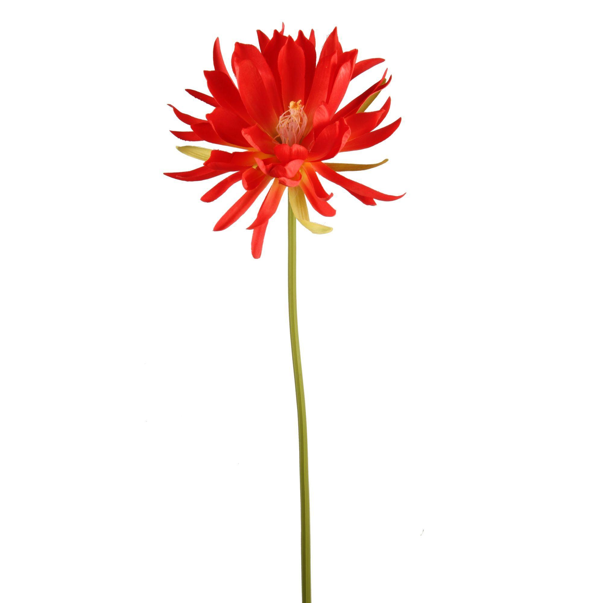 Fleur Tropicale Rouge D21cm H80cm Tropicale Plantes