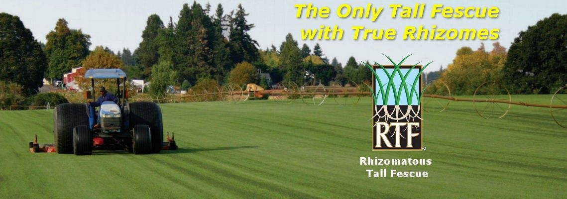 Rtf Sod At Kuenzi Turf Nursery In M Oregon
