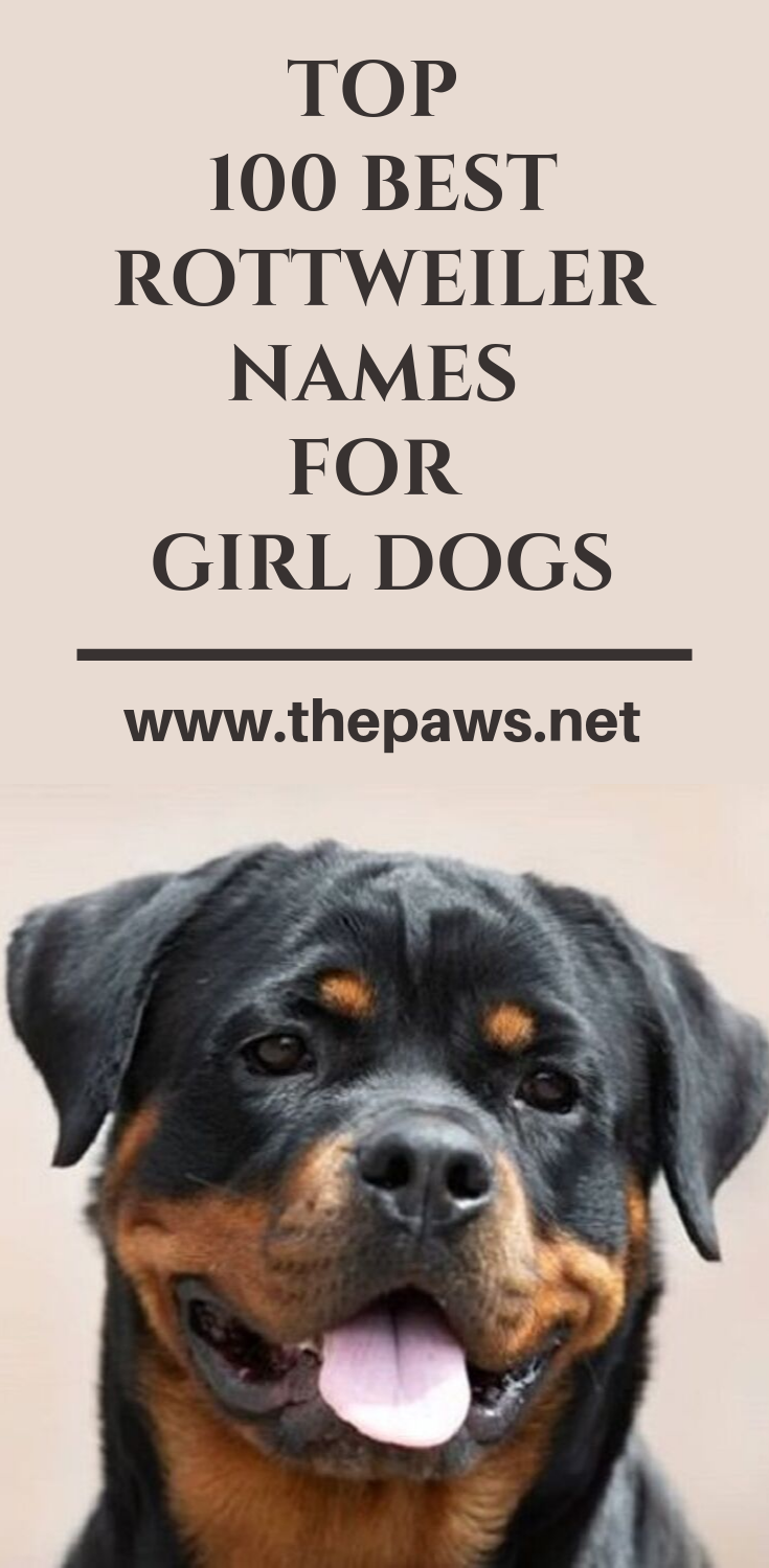 Top 100 Best Rottweiler Names For Girl Dogs Rottweiler Names Girl Dog Names Female Dog Names