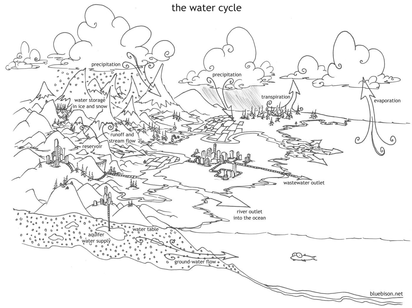 Exclusive Picture of Water Cycle Coloring Page (With