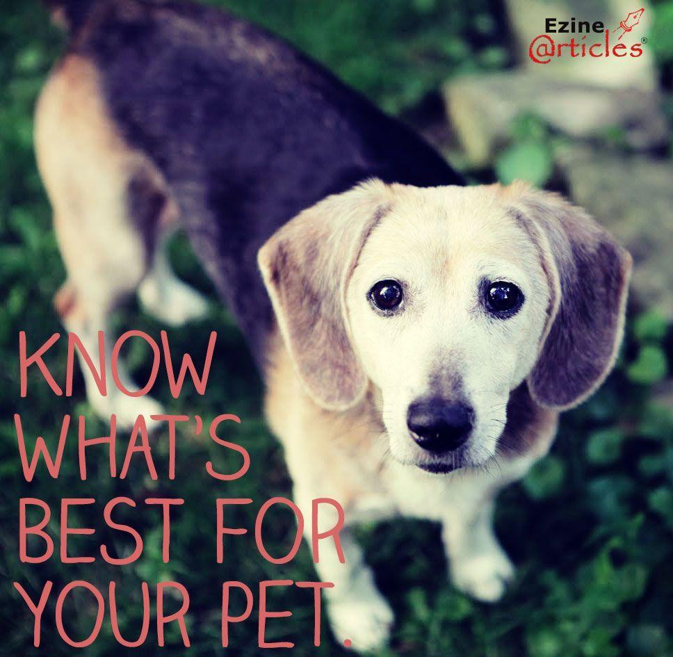 Idyllic Is Lipoma Dogs Small Fatty Dog No Stress Fatty Tumor