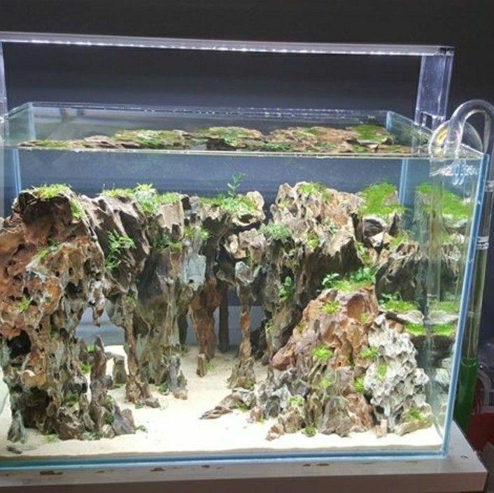 pin von sylvain bui auf aqua pinterest aquarium aquarium einrichten und aquarium terrarium. Black Bedroom Furniture Sets. Home Design Ideas