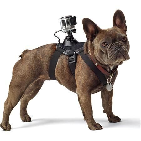 Gopro Fetch Dog Harness For All Gopro Cameras Dog Harness Gopro