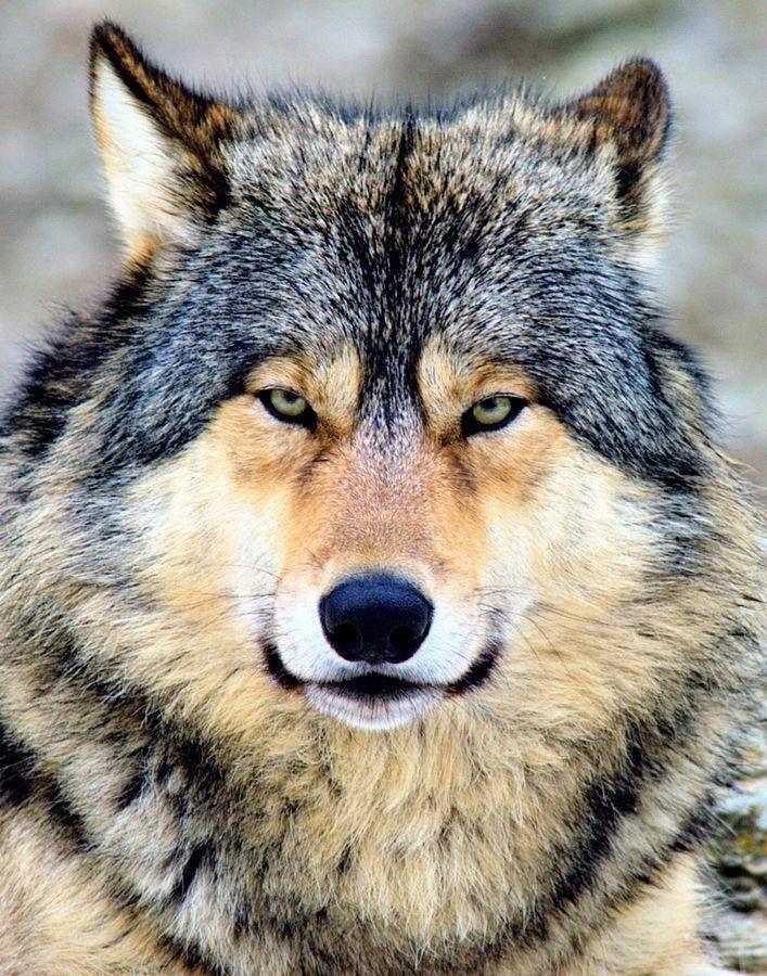 Stunning Wildlife on Twitter
