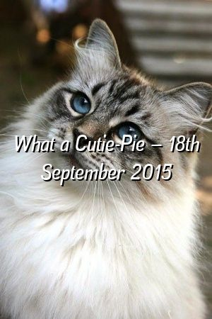 Lauren Bower Tells About What a Cutie-Pie – 18th September 2015  #australianmist  #kitten  #catoftheday  #dogs  #lovecats  #Kittens  #catcondo  #Guide