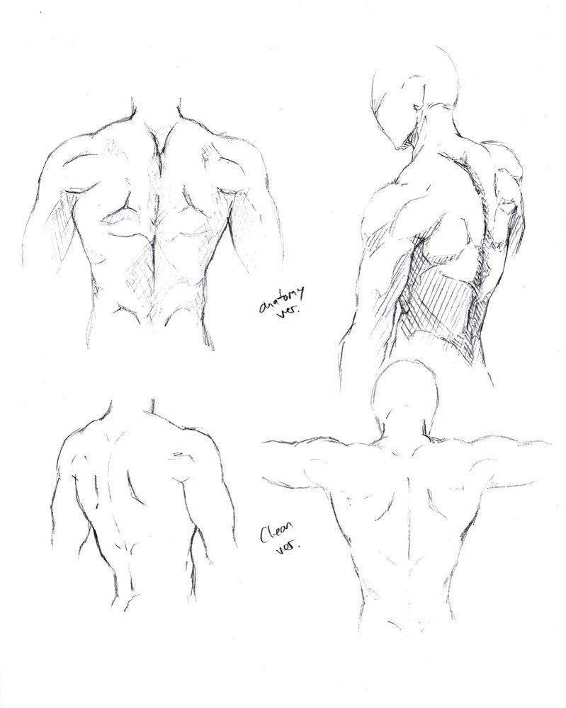 Male Torso Back By Shinsengumi77 On Deviantart Body Poses