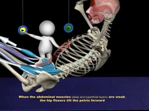 Sit up curl up anatomy see how the muscles in the abdomen are sit up curl up anatomy see how the muscles in the abdomen ccuart Choice Image