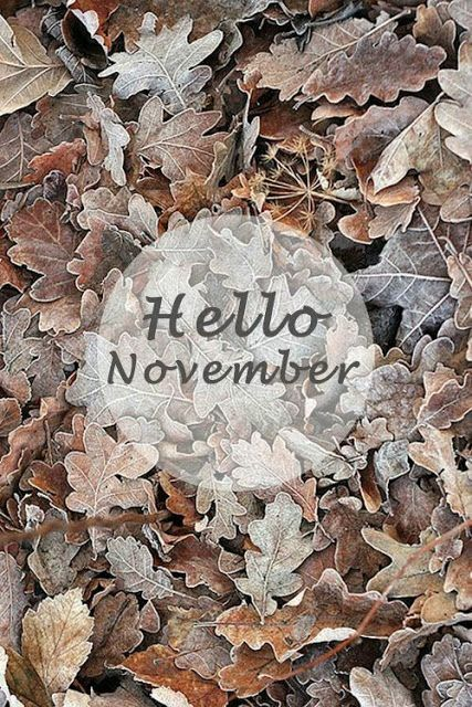 HELLO NOVEMBER - LATE FALL INSPIRATIONS