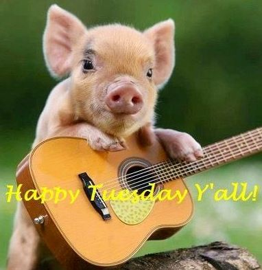 Happy Tuesday! via Carol's Country Sunshine on Facebook | Tuesday ...