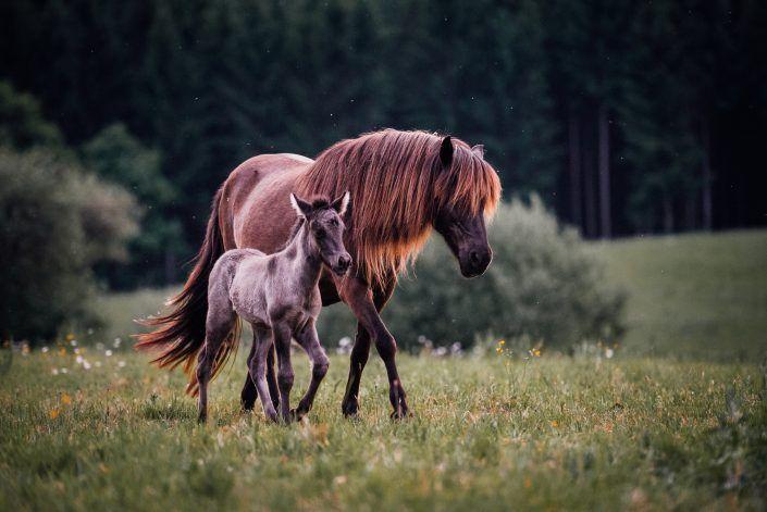 Fotos Pferde In Der Natur I In 2020 Pferde Pferde Fotografie Pferde Wallpaper