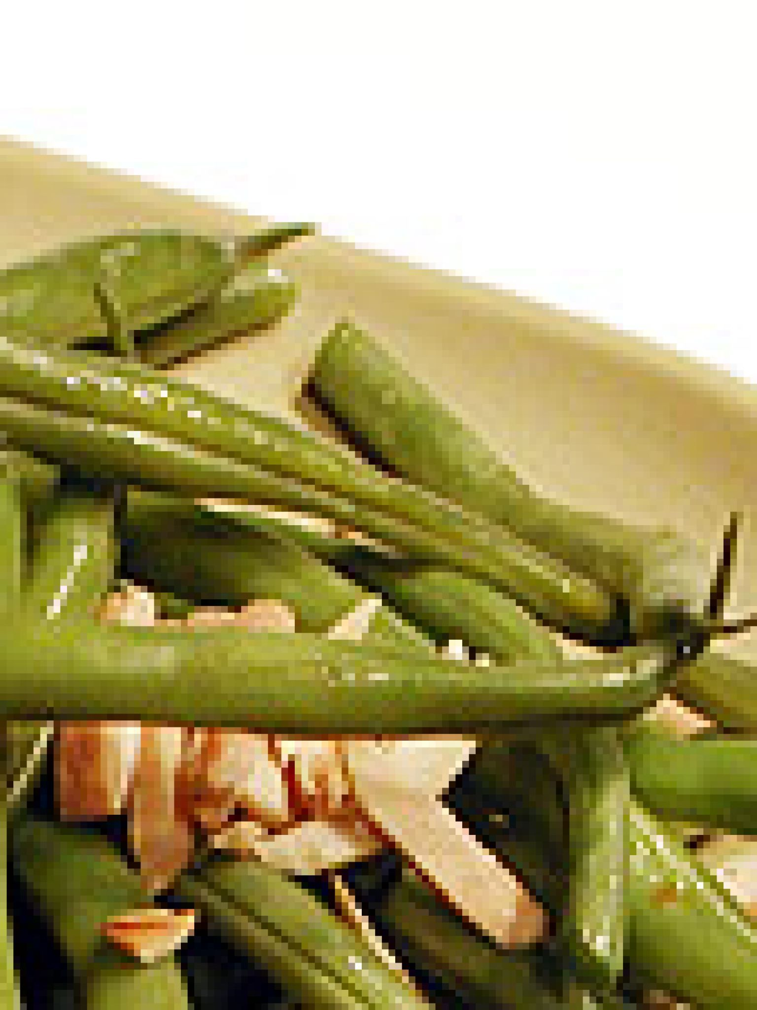 Green beans with toasted almonds recipe green beans