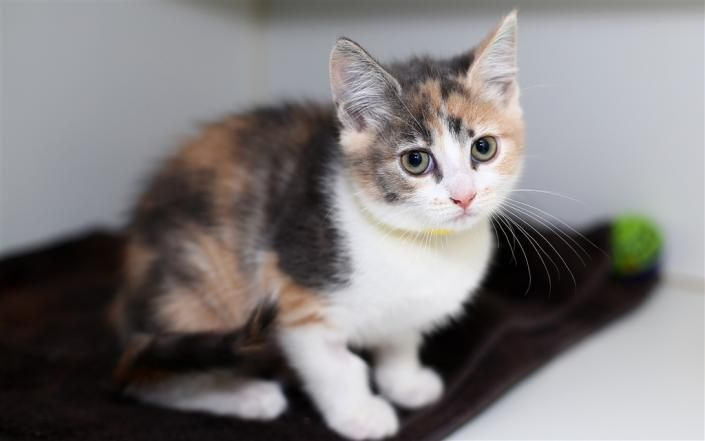 Cats looking for new homes Adopt one today Cat