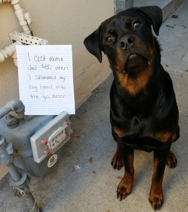 Pet Shaming At Its Finest (38 Pet Shames) - I Can Has Cheezburger?