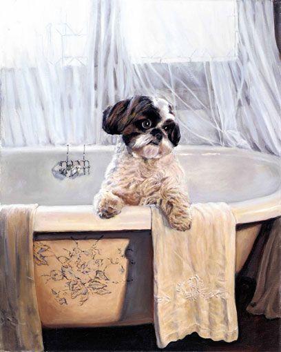 Page Not Found Shih Tzu Shih Tzu Puppy Puppies