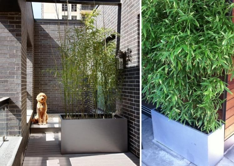 Bambou en pot brise vue naturel et d co sur la terrasse for Idee plante terrasse