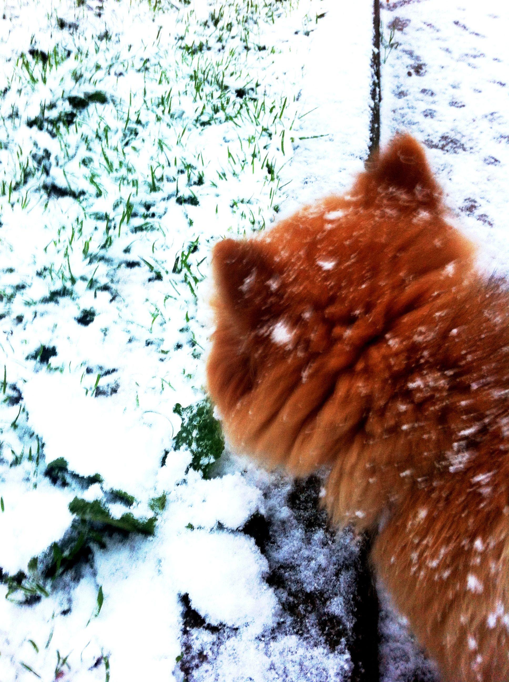 y más nieve...