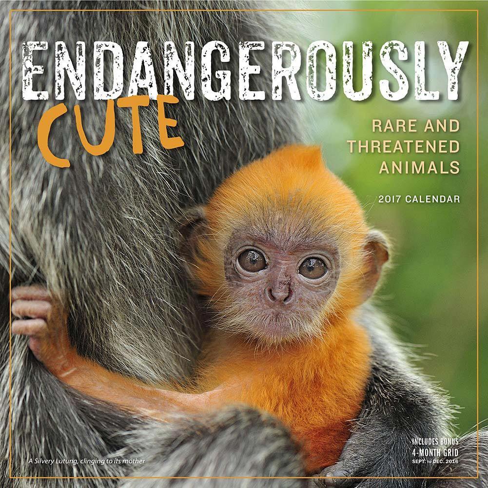 Endangerously Cute 2017 Wall Calendar