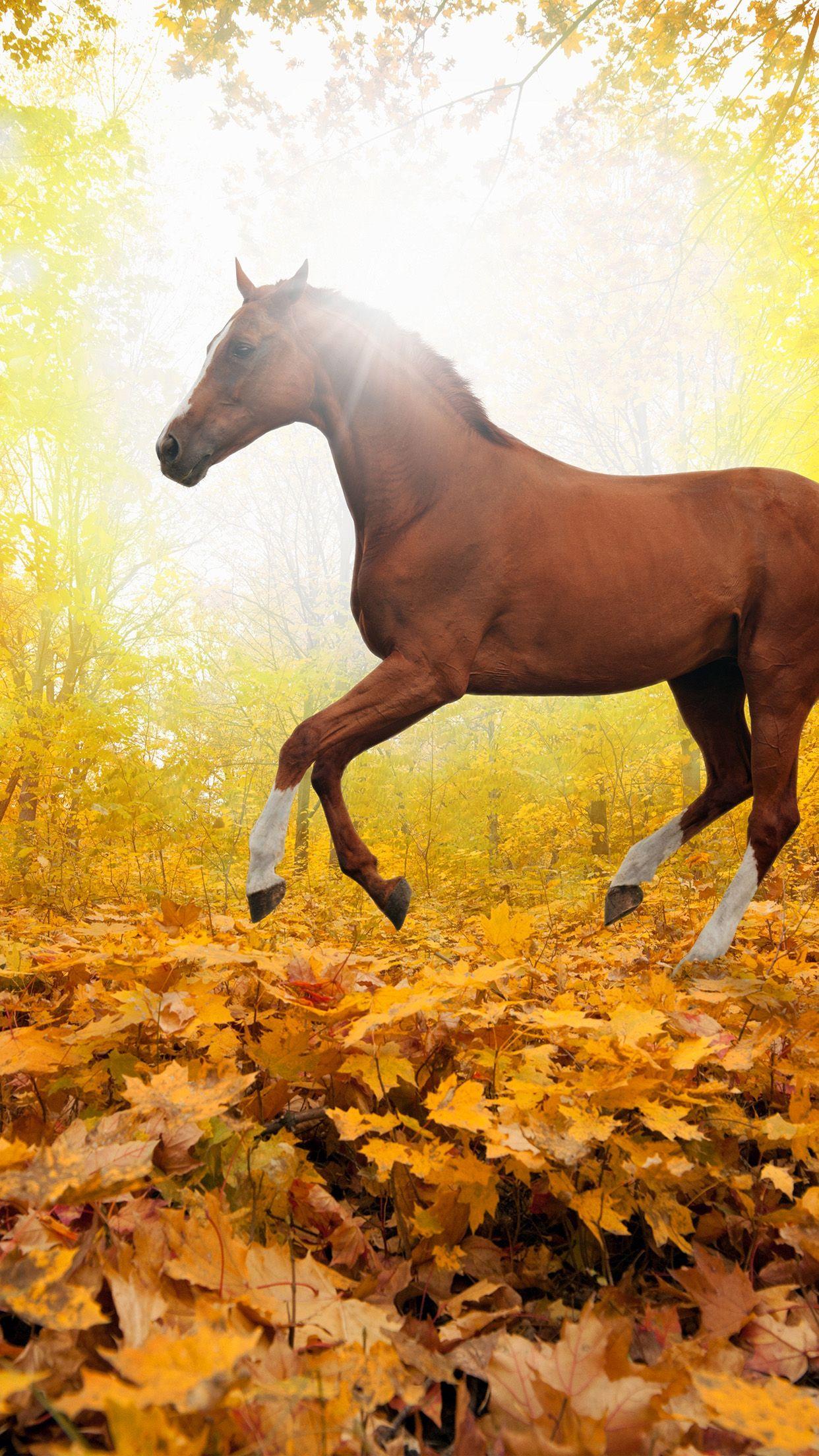 awesome horseartanimalfallleafmountainrediphone6