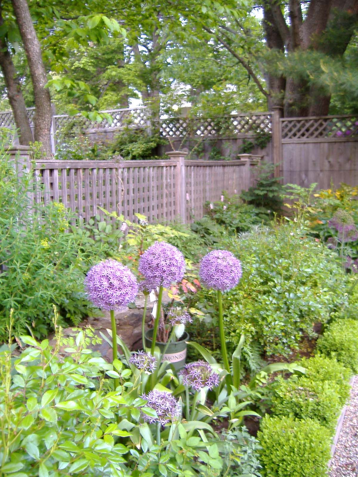 mixed plantings along fence line of rose garden before sandy storm designs by linda pastorino