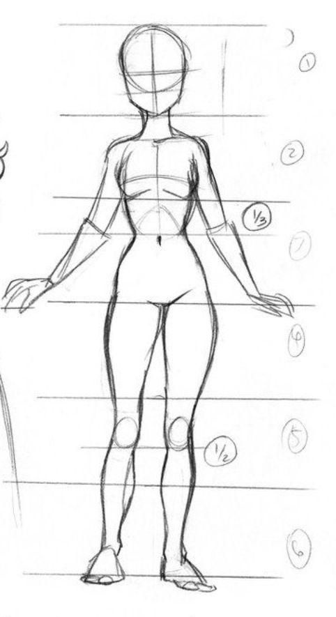 Pin by Dana Zamir on anatomy references | Pinterest | Human drawing ...