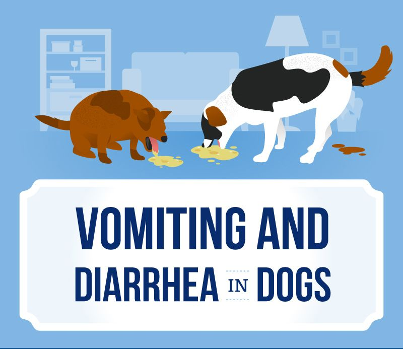 Vomiting And Diarrhea In Dogs Diarrhea In Dogs Dog Has Diarrhea