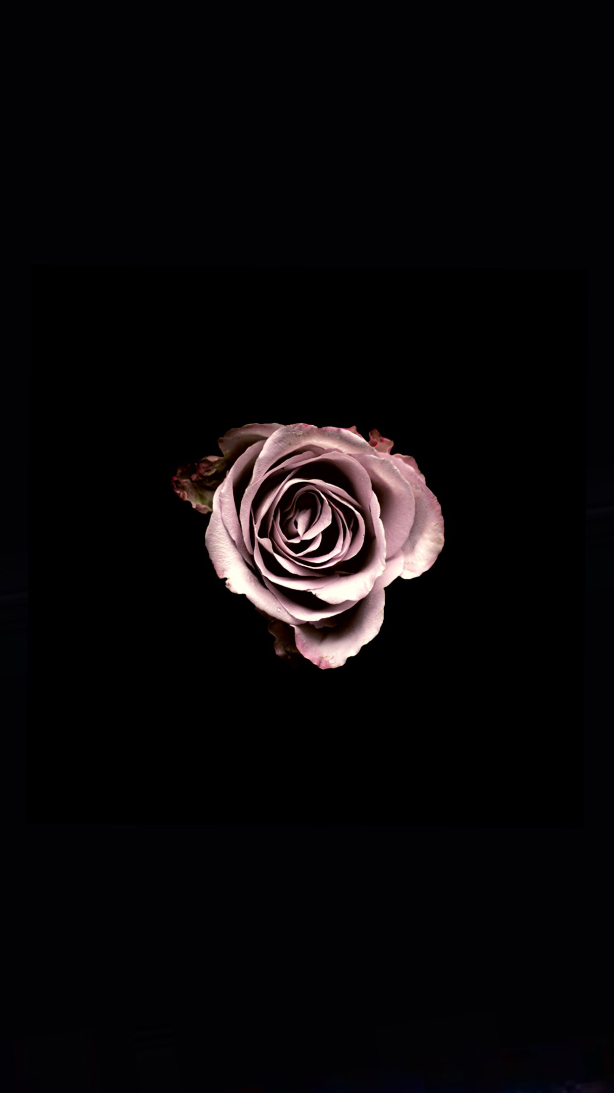 Rose Darkbackground Dark Black