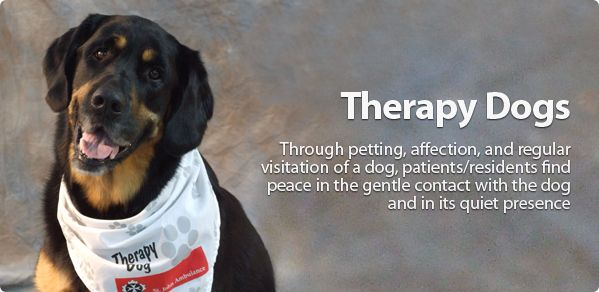 Therapy Dog St John Ambulance Canada The Program Started In