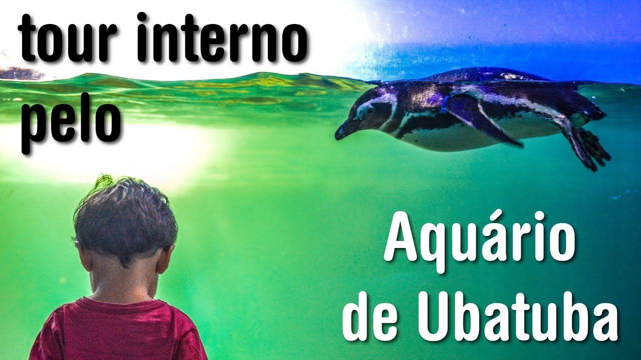 Aquario De Ubatuba Passeio Tour Interno Com Imagens Ubatuba