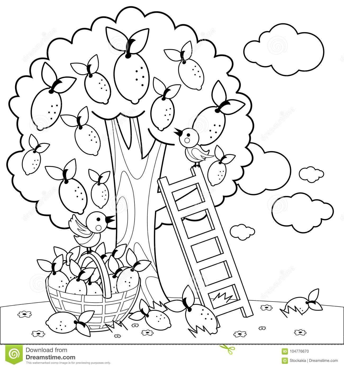 Lemon Tree Harvesting Coloring Book Page Vector Illustration Birds Ladder Basket Harvested Lemons B Tree Coloring Page Fruit Coloring Pages Coloring Book Pages