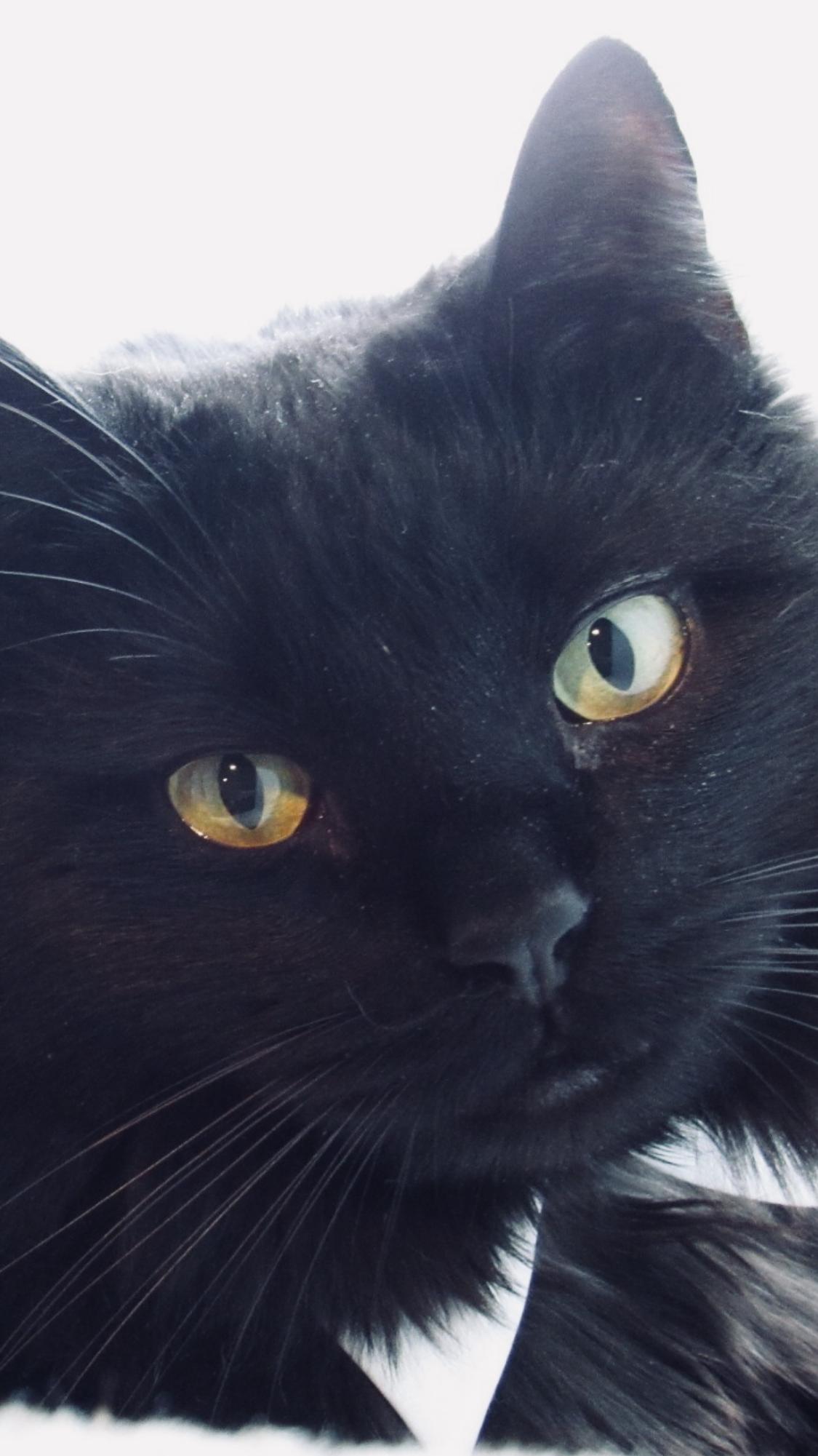 Black Cat Lovers Cats Black Cat Lover Animals