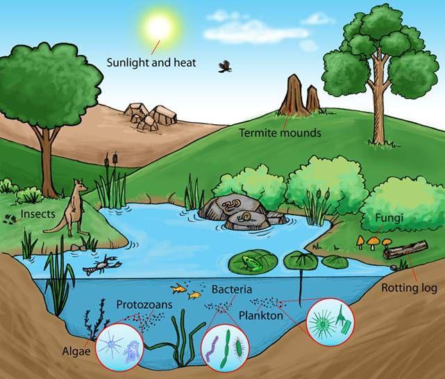 Aquatic Ecosystem Pictures Aquatic ecosystem networks | Aquatic ...