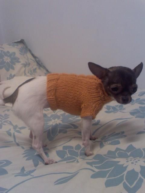 Darby\'s Cabled Sweater Pattern (Chihuahua Sweater) | Pinterest | Abrigos