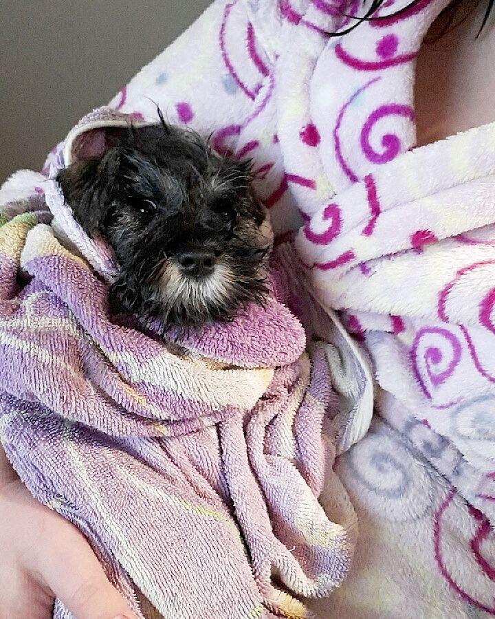 Clean pupper is best pupper http://ift.tt/2s8Fxiw
