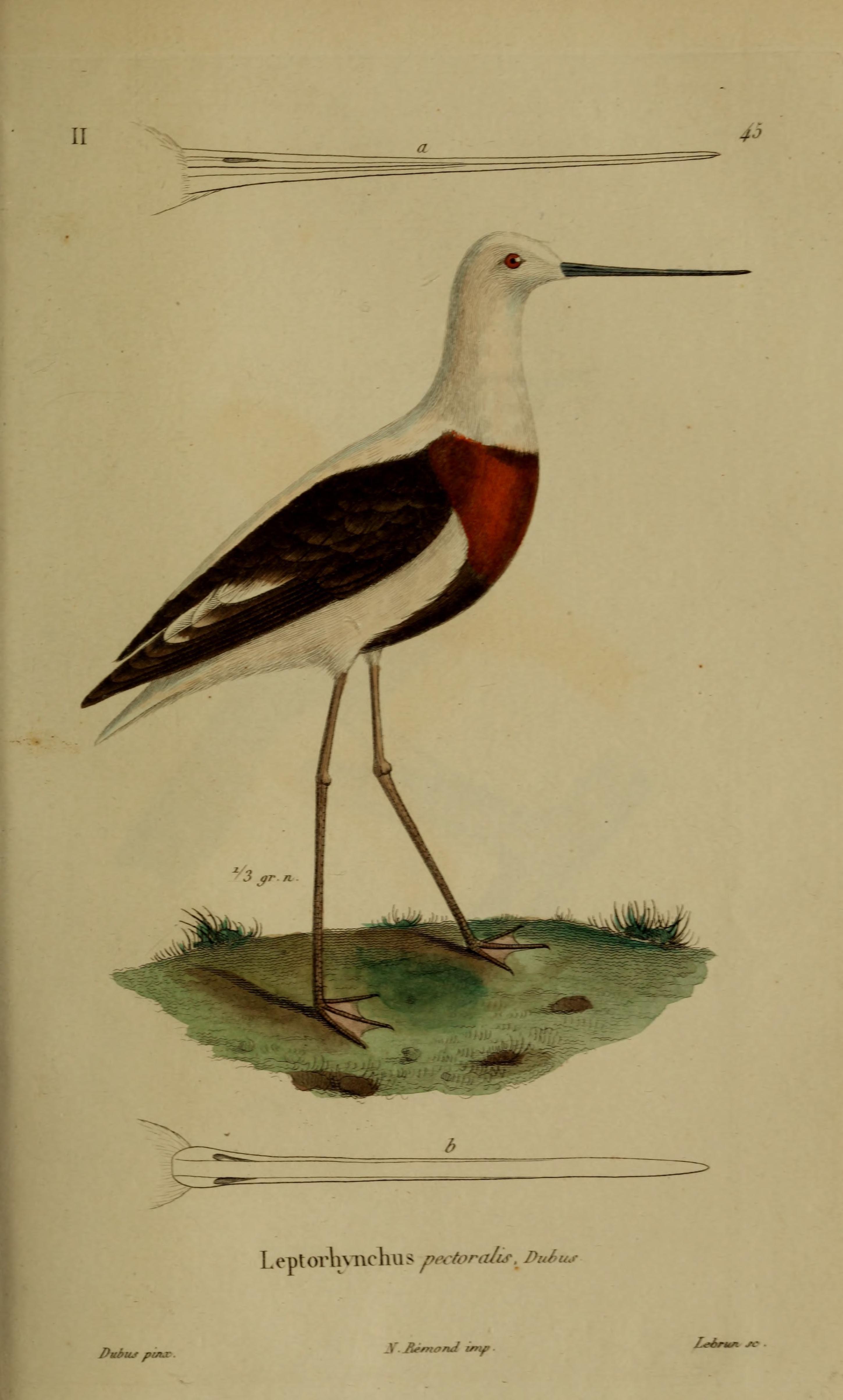 v.5 (1835) - Magasin de zoologie. - Biodiversity Heritage Library ...