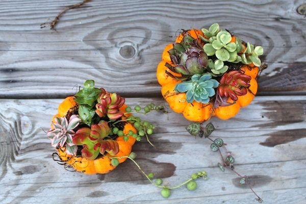 how to #DIY a succulent pumpkin! cute idea for #halloween & #thanksgiving decor