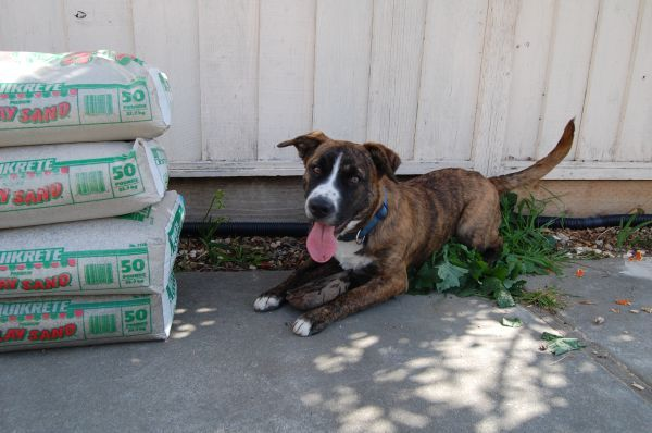 Craigslist Pets Austintown Ohio