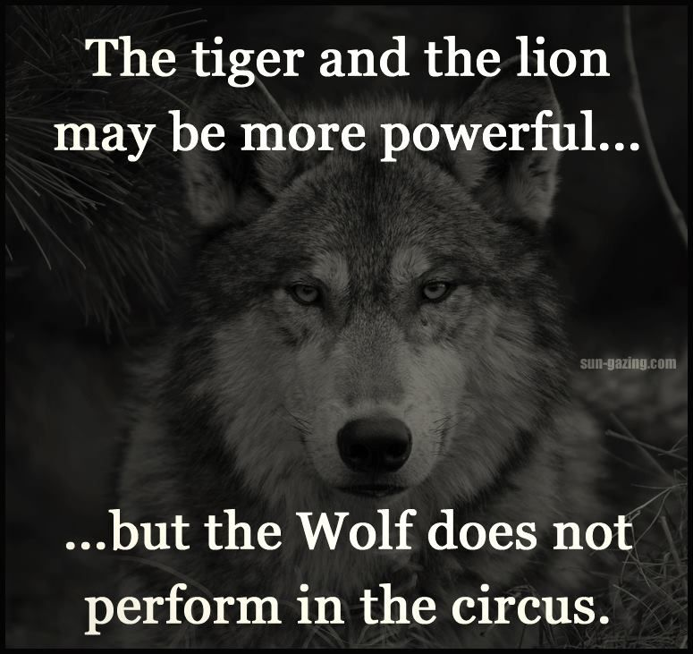 The tiger and the lion may be powerful...but the wolf does not perform in the circus.