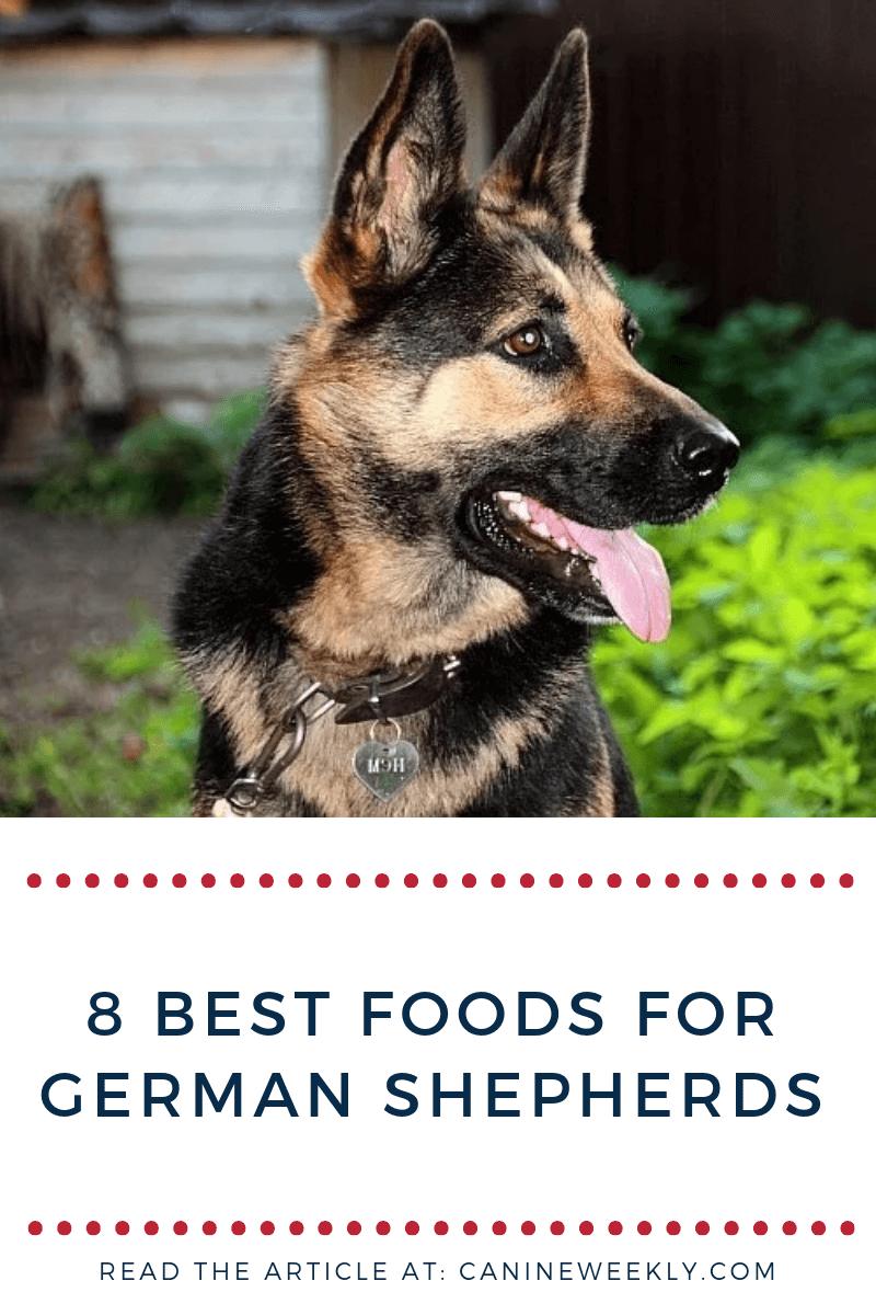 8 Best Dog Food for German Shepherds [2020 Reviews] Best