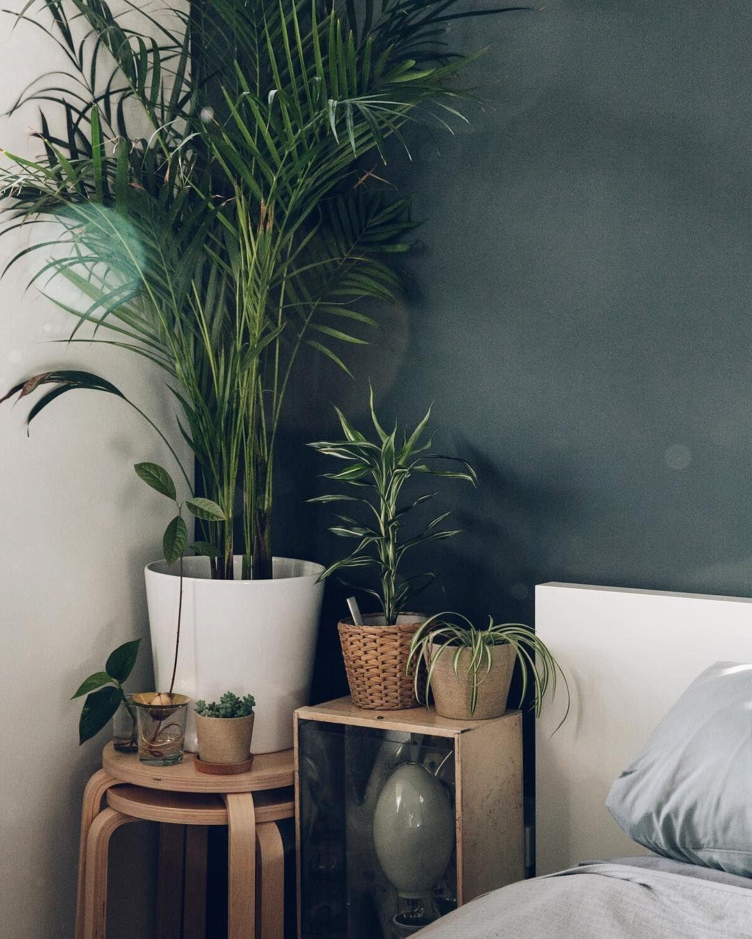 Bedside plants - Haarkon / India & Magnus (@haarkon_) • Instagram ...