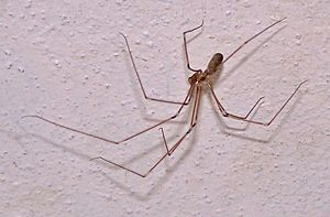 cellar spiders bugs in basements damp basements attract bugs of