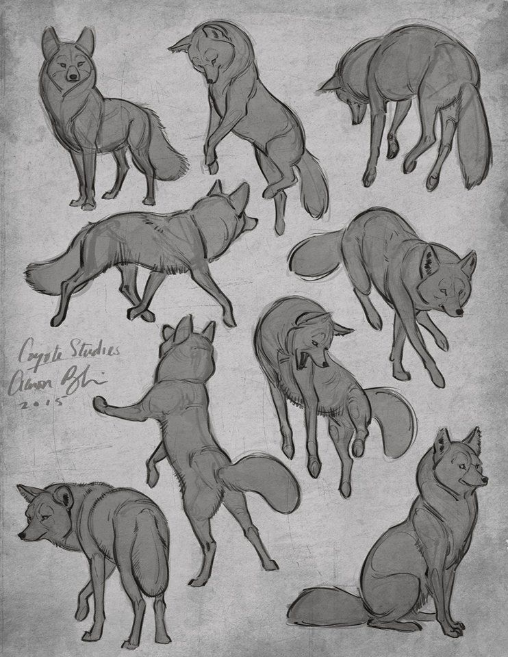 Tutorial for Drawing Dogs | Drawing Dogs | Pinterest | Lobos, Dibujo ...