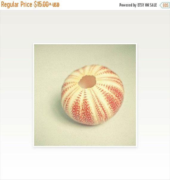 SALE 25% OFF Sea Urchin Art Still Life Photography Sea Shells Beach ...