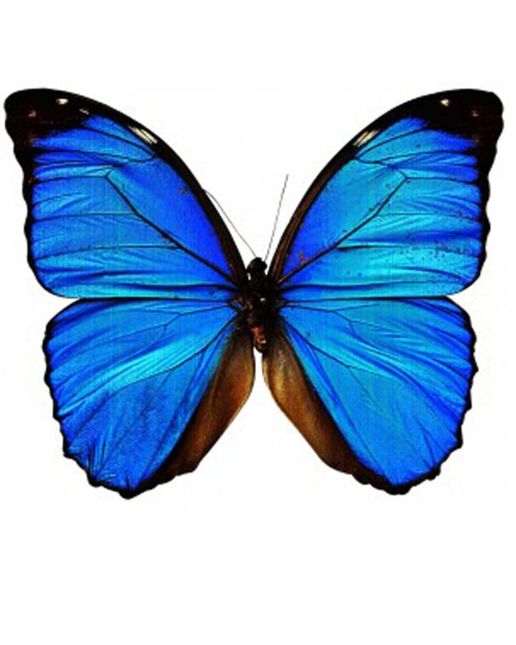 INKWEAR Blue Butterfly Tattoo In Love With Fashion | Free ...