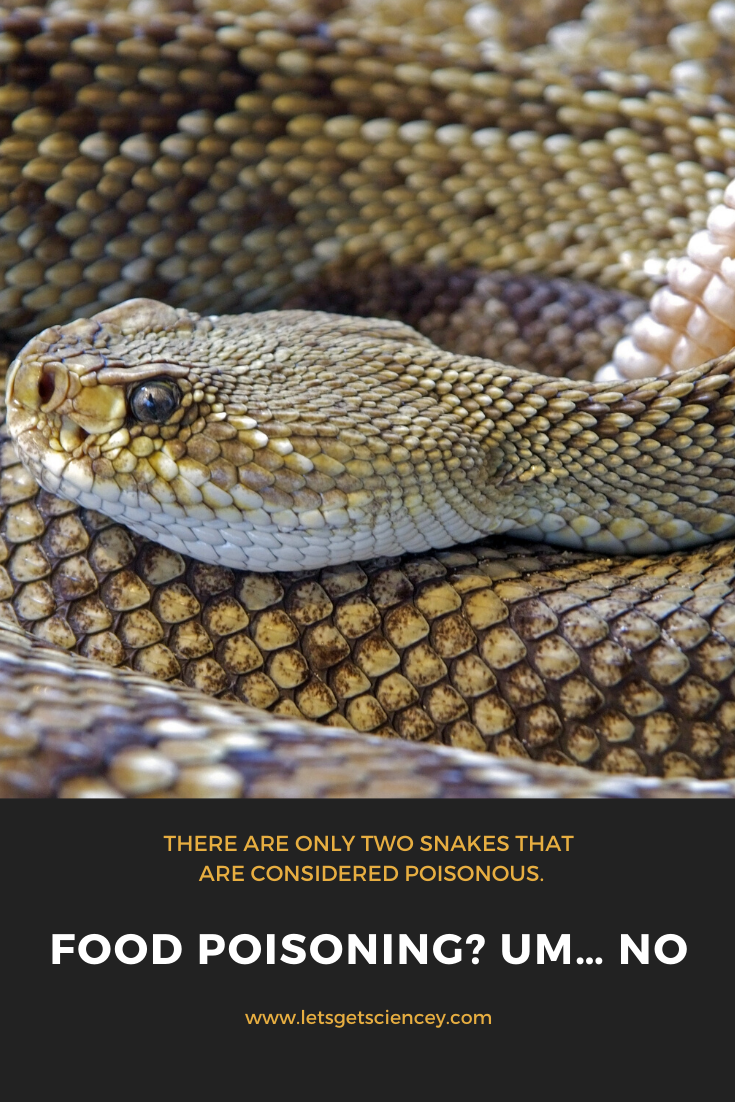 30 Fassscinating Facts About Snakes With Images Snake Facts