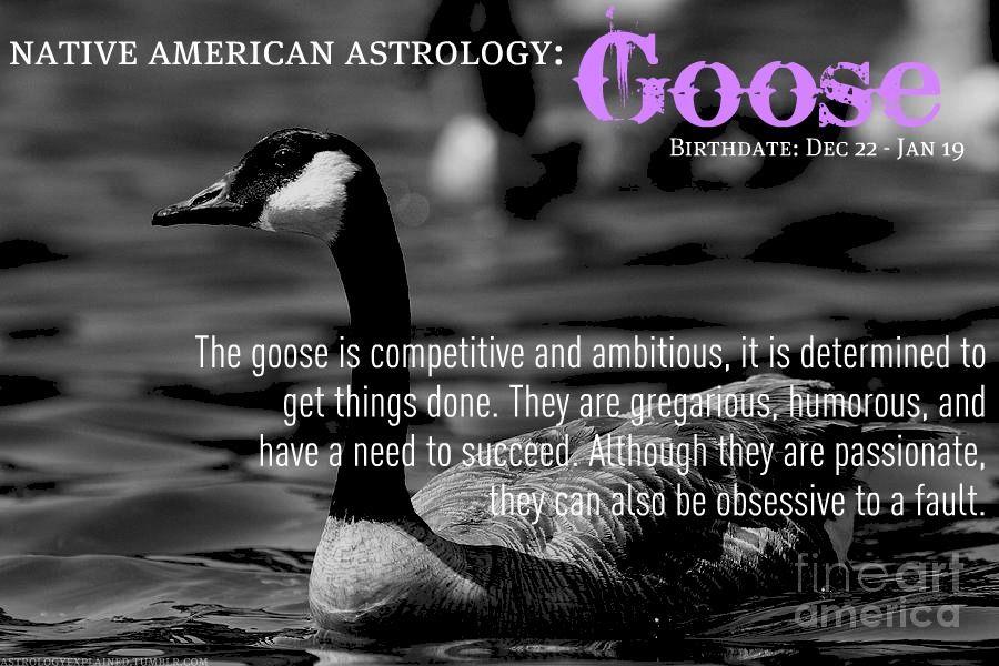 native american astrology goose december 22 january 19 zodiac world native american. Black Bedroom Furniture Sets. Home Design Ideas