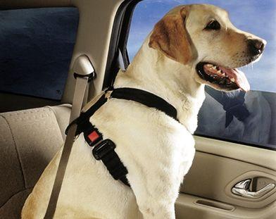 F Bb E Bacda B D E on Dog Car Seat Belt Restraint